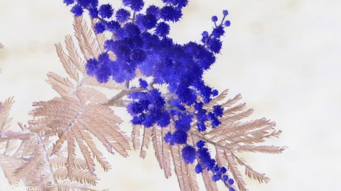 Wattle - inverted