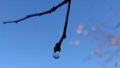 Dew Drop (1)