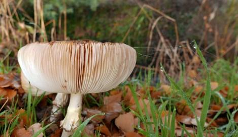 Fungi (2)