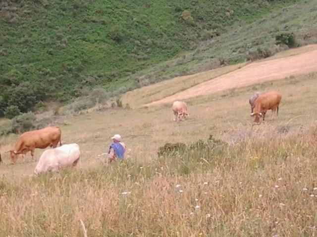 Koeienherder op de flanken van Col o Cebreiro.