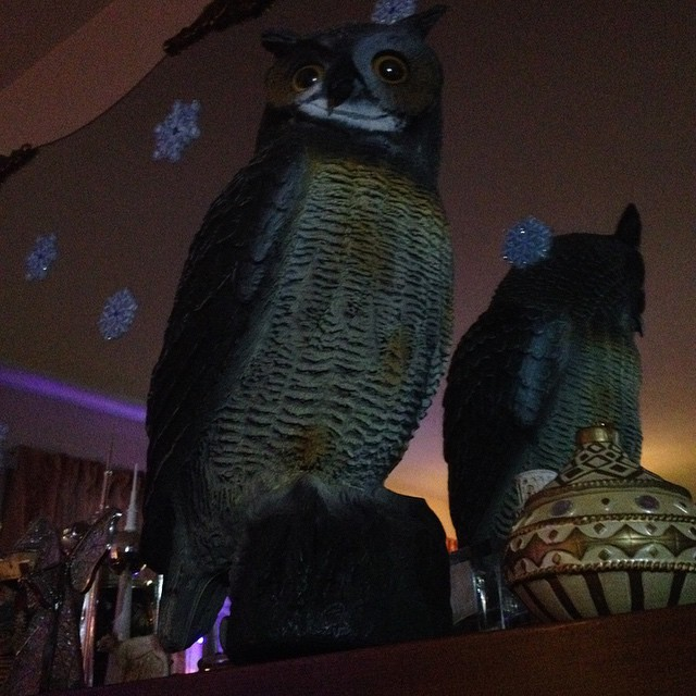 Hooter on a shelf is cooler than an elf.