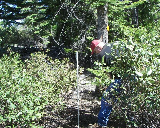 Photos: EWOR Ahtanum State Forest Green Dot Work Party Part 1 of 2 25