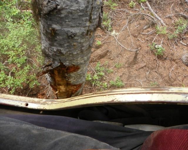 Photos: Yellow Jeep Run - Little Rattlesnake 34