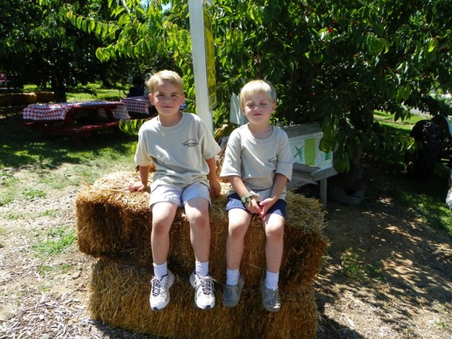 Cherry Festival at Barrett Orchards 7