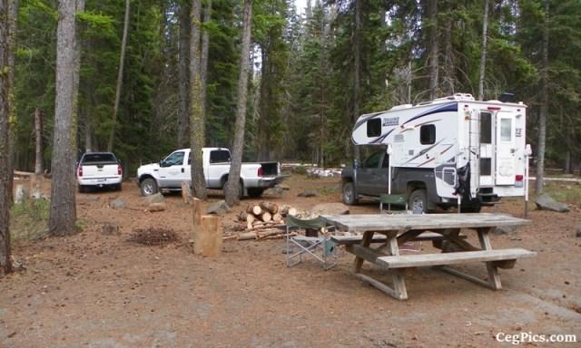 Tree Phones Camping Trip 5