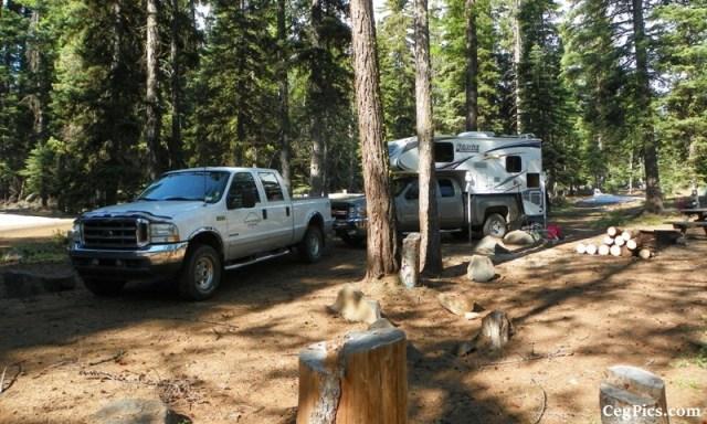 Tree Phones Camping Trip 6