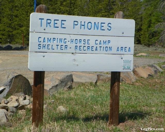 Tree Phones Camping Trip 13