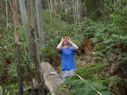 Measuring the height of Eucalyptus delegatensis. Photo courtesy of Associate Professor Geoffrey Cary.