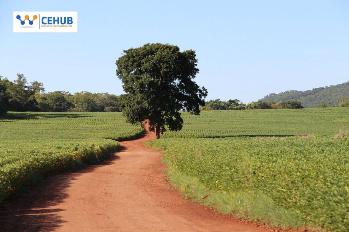 Agribusiness farmland