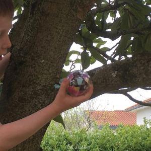 chasse aux oeufs dans l'arbre
