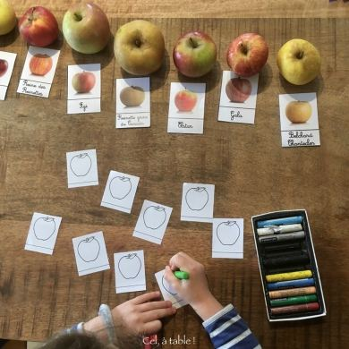 Colorier les étiquettes de pommes selon les couleurs observées