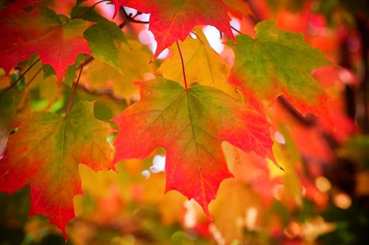 autumn20leaves-533x354