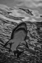 fish-ncworks-29-of-48