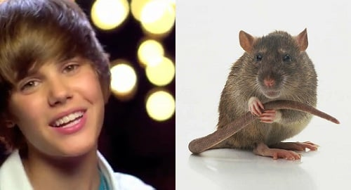 Justin Bieber Tortures Rats with a Hacksaw