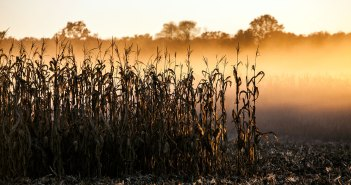 Adams County Corn