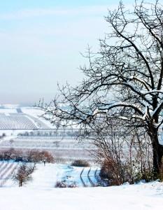 Adams County Winter