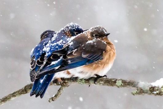 How to Help Birds in Winter!