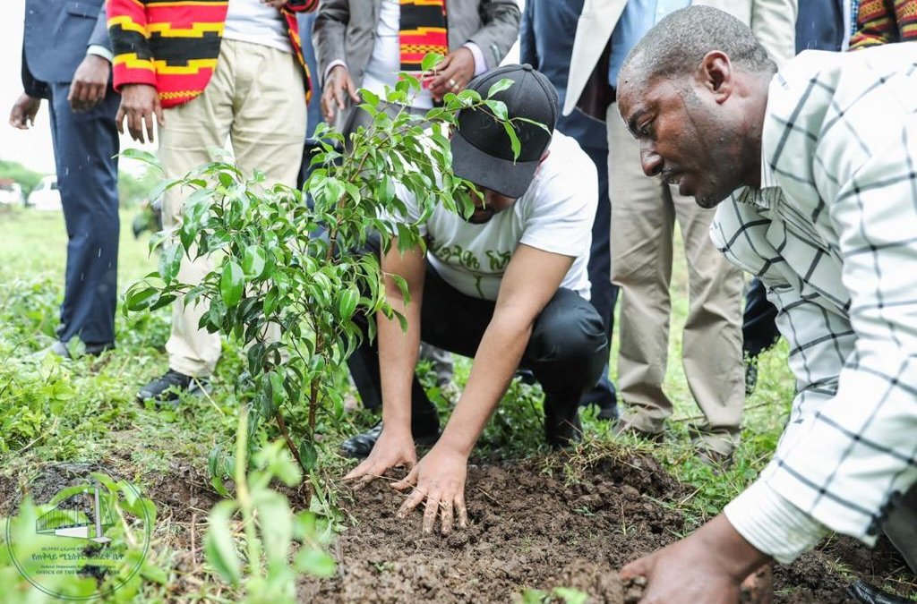 Ethiopia Planted 350 MILLION Tree Saplings in One Day