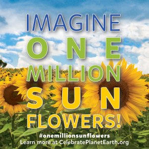 One Million Sunflowers!