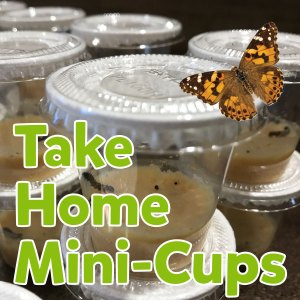 Take-Home Mini-Cups