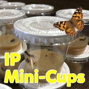 IP Caterpillar Mini-Cups