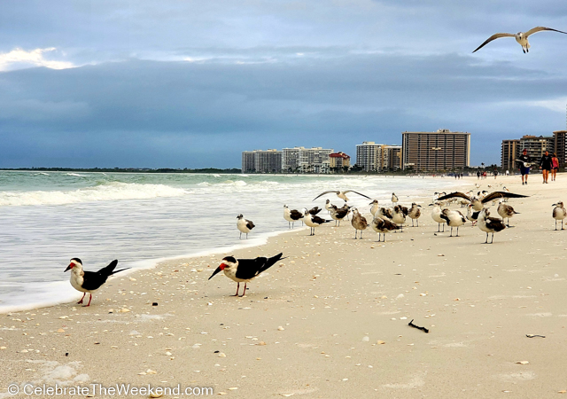 What to do on Marco Island