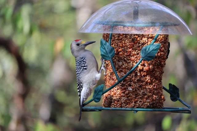 woodpecker-5761555_1280