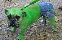 Funny Dog Costumes | www.pixshark.com - Images Galleries ...
