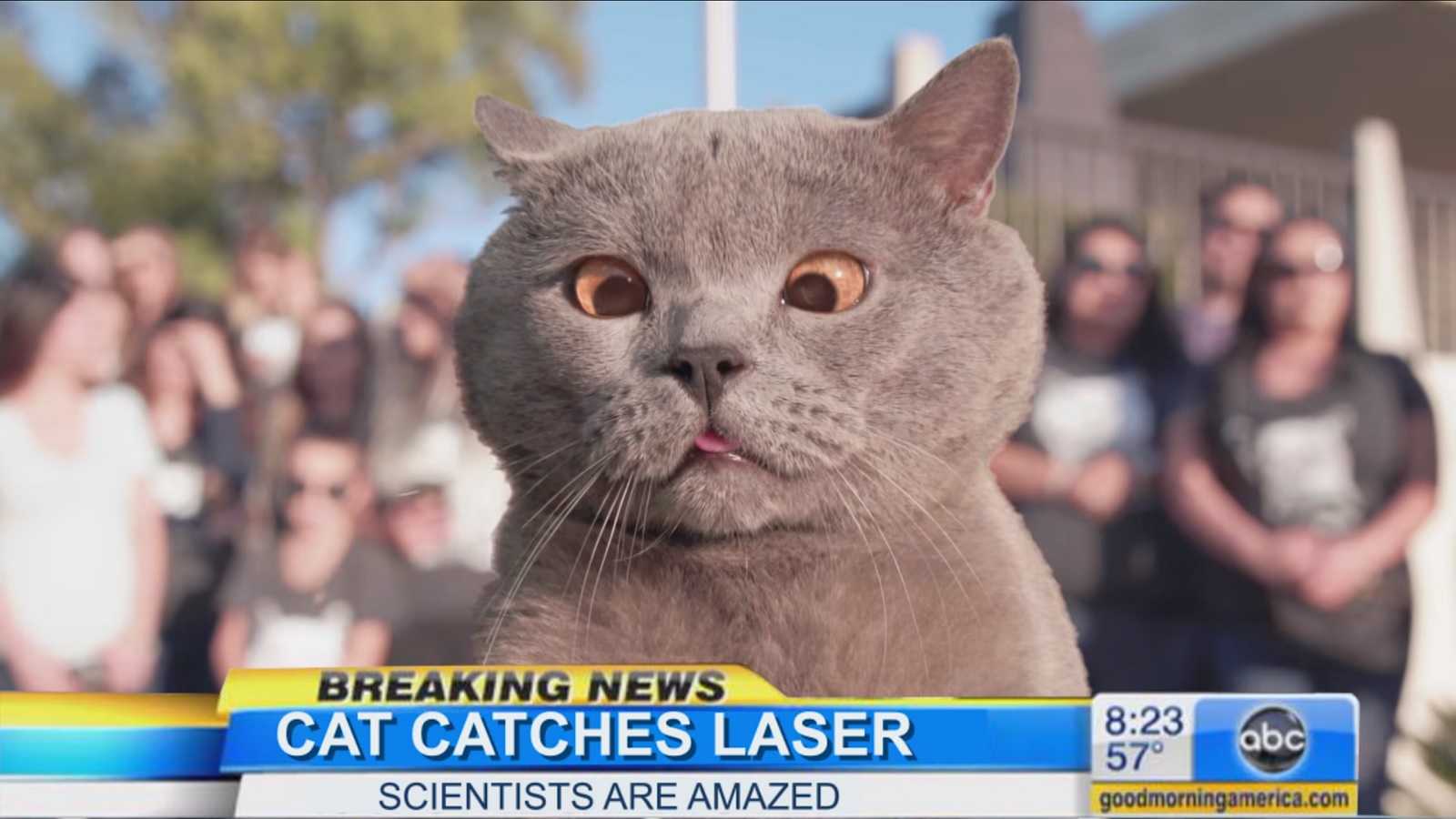 The cat who finally caught the laser and more hilarious