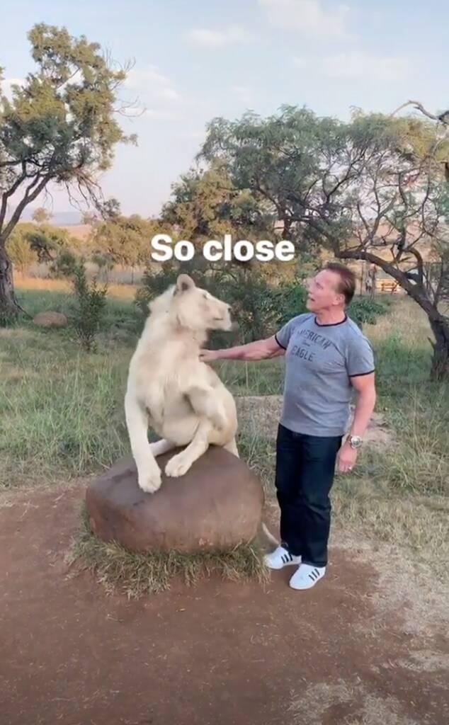Arnold Schwarzenegger, Cat, South Africa, Instagram