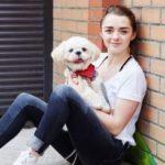 Maisie Williams pet dog sonny