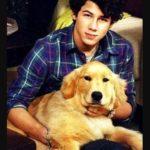 Nick Jonas Pet dog