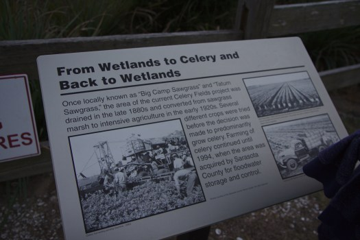 Photo of placard at the Celery Fields: From Wetlands to Celery and Back to Wetlands