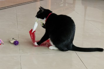Felix likes this mouse