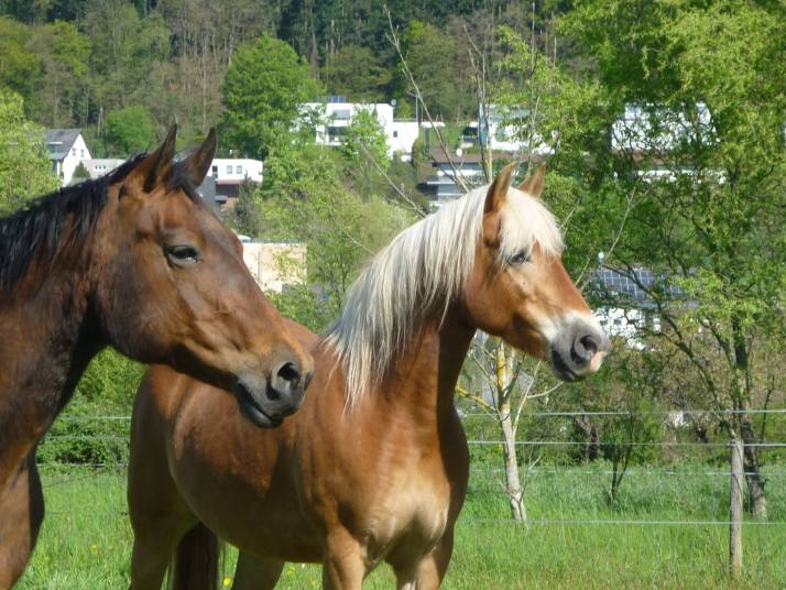 Pferdemutti Tag