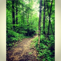 This picture is of one of the trails at the summer camp.