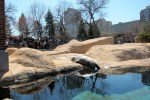 Sea lion sunning at Chicago's Lincoln Park Zoo, © 2013 Celia Her City