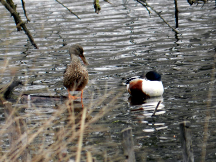 Shovelers, North Pond, Chicago © 2013 Celia Her City