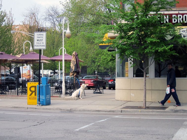 Photograph of a dog waiting for its owner outside Einstein Brothers' Bagels, Chicago