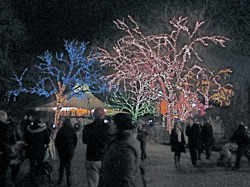 Chicago Zoo Lights scene, © 2013 Celia Her City