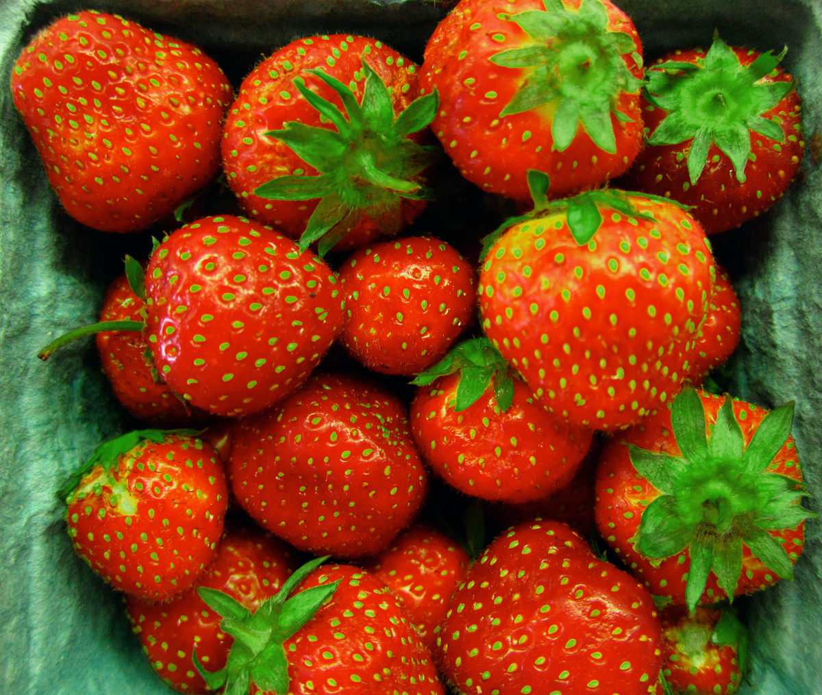 Strawberry season, © 2014 Celia Her City