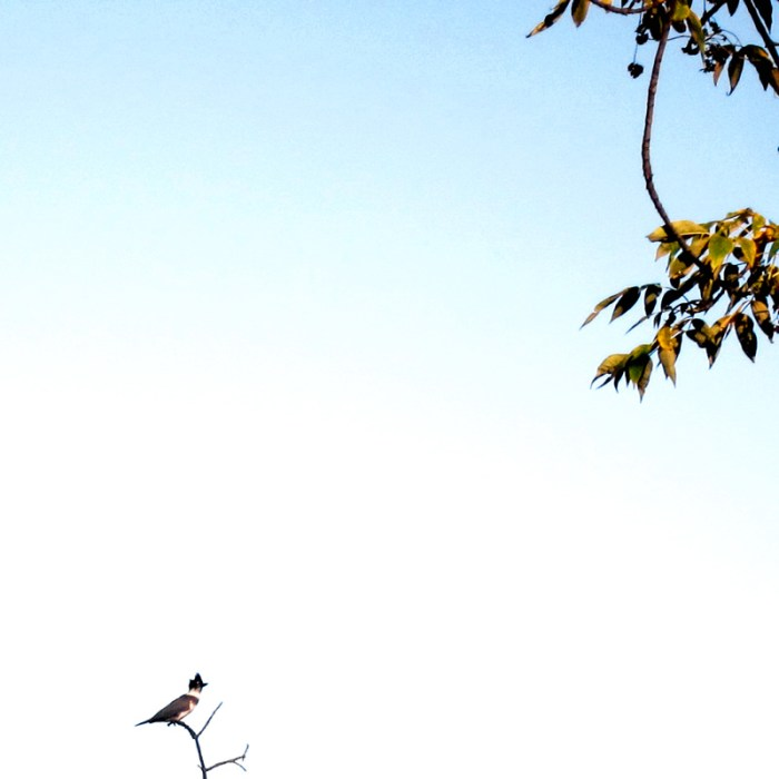 A kingfisher on a branch, silhouetted against the sky.