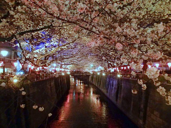 Meguro River night light-up