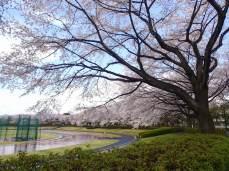 Akirudai Athletics Park