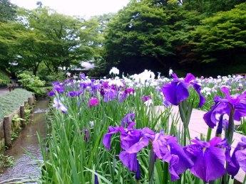 Private 'inner garden'