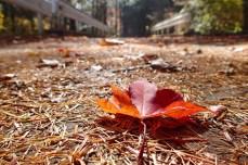 Adieu, autumn
