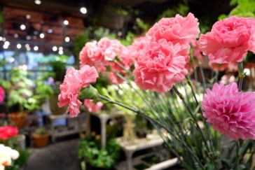 Aoyama Flower