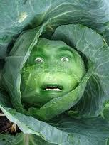 cabbageface