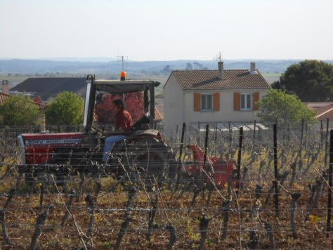 tractor in the vines