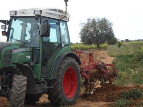 vineyard weeding
